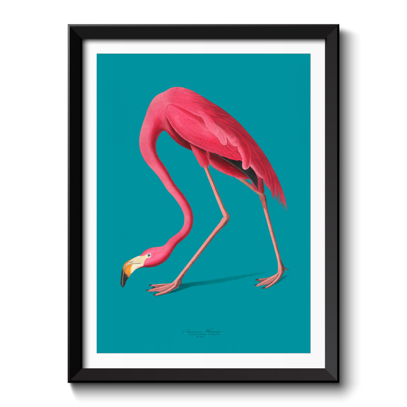 American Pink Flamingo Framed Wall Art Print