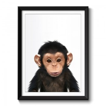 Baby Chimp Framed Print