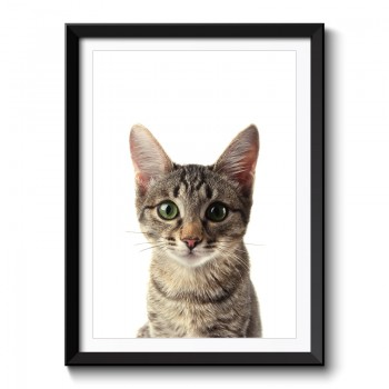 Baby Kitten Framed Print