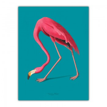 American Pink Flamingo Canvas Wall Art Print