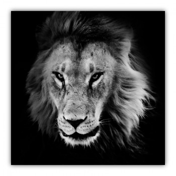 King of the Jungle Black & White Lion Canvas Wall Art Print