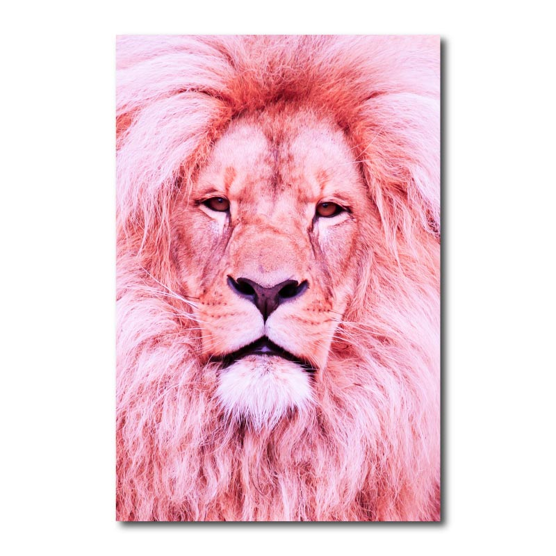 Pink Lion Canvas Wall Art Print